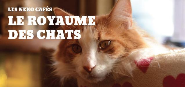 Carnet japonais : Visite guidée des Neko Cafés, paradis des chats au Japon