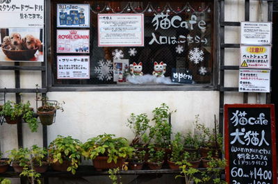 café, chats, chat, japon, kyoto, neko, cafés, wan, nyan, chu, thé, café, bar, restaurant, animal, animaux, félin, félins, carnet, visite, infos, photo, photos, informations, coordonnées