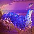 South Kensington Palace : Enchanted Palace