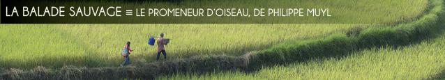 Cinéma : Le Promeneur d`oiseau de Philippe Muyl