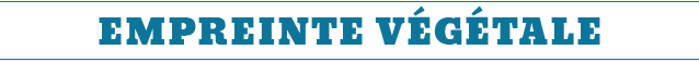 giuseppe penone, giuseppe, penone, livre, le regard tactile, arte povera, arte, povera, françoise jaunin, jaunin, françoise, bibliothèque, arts, bois, or, tactile, regard, photo, photos, interview