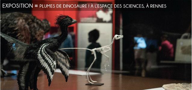 dinosaures, dinosaures a plumes, espace des sciences, champs libres, rennes, museum dhistoire naturelle de nantes, musée paléontologique du liaoning, anchiornis, microraptor, fossiles, chine
