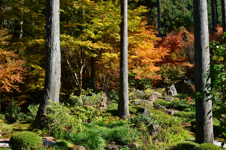 sanzen-in, sanzen, in, temple, bouddhiste, bouddha, bouddhisme, japon, visite, exposition, jardin, information, horaire, horaires, photo, photos, image, infos, tourisme, visite