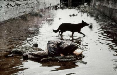 stalker de tarkovski le stalker et le chien